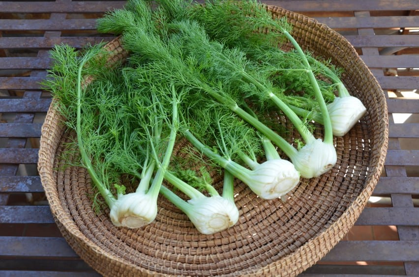 tarragon substitute fennel