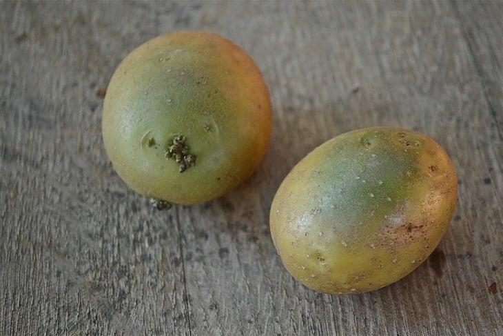 how-long-do-potatoe-last-poision