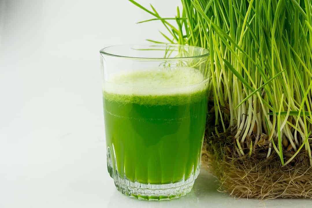 best-wheatgrass-juicer-benefit