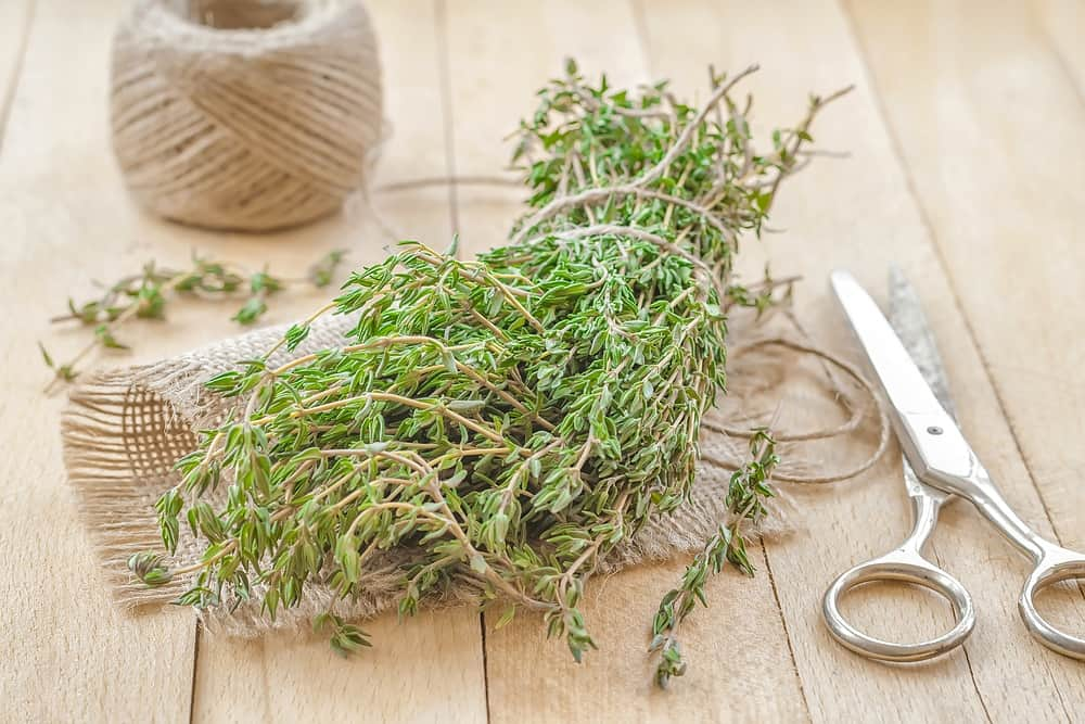 sage-substitute-thyme
