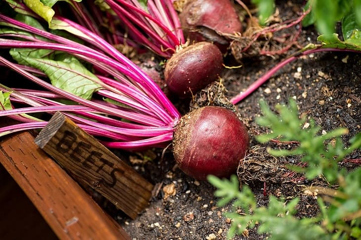 what-do-beets-taste-like-raw
