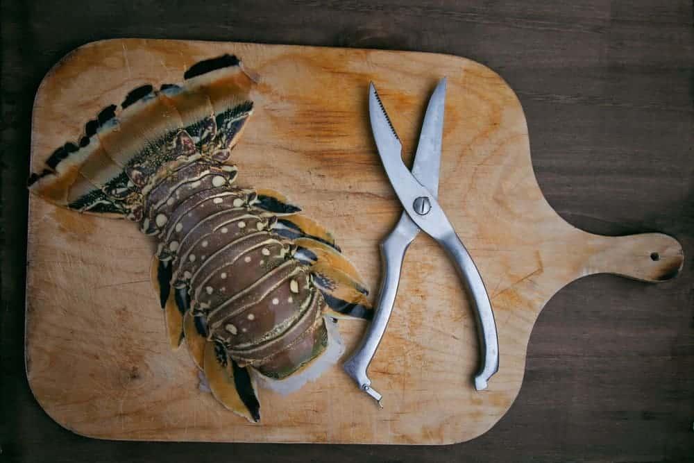 best-poultry-shears