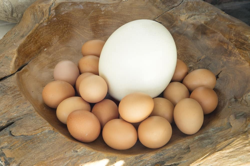 What Does An Ostrich Egg Taste Like