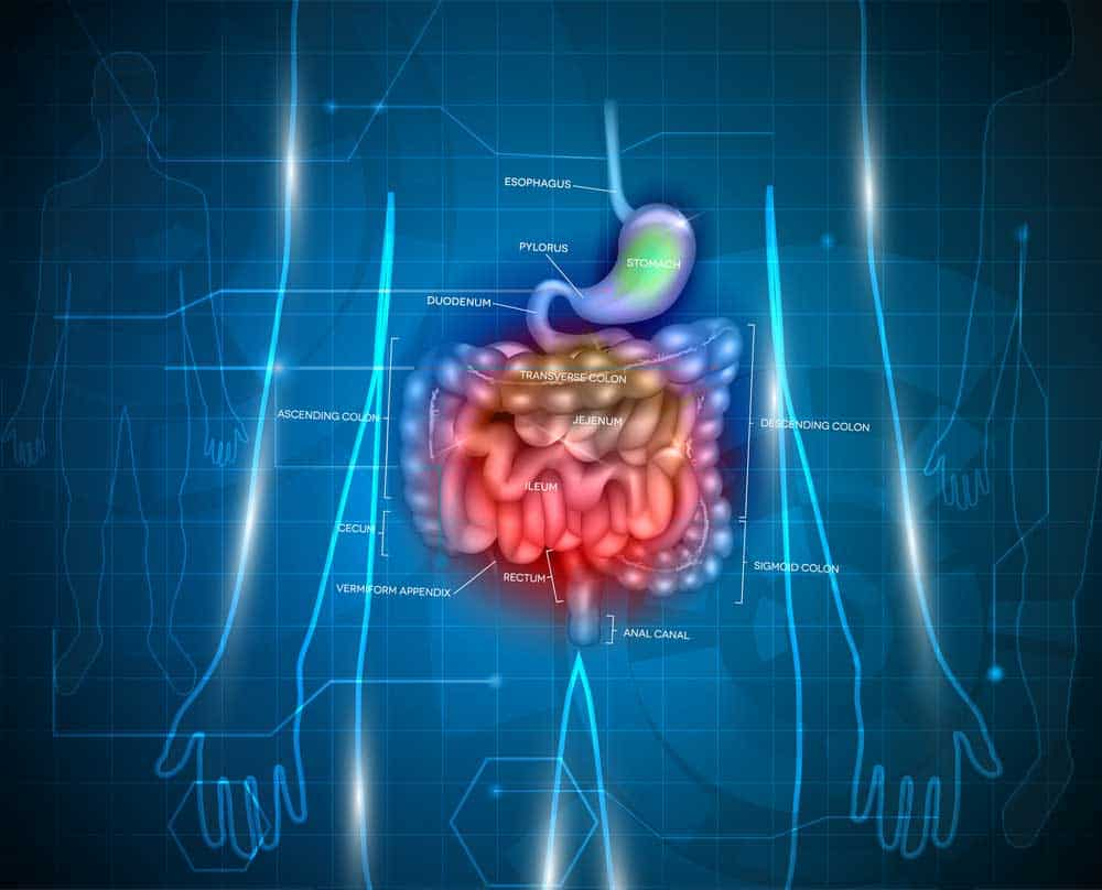Problems Of The Gut